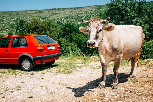 Slow Travel on Rural Roads - Driving in Bosnia