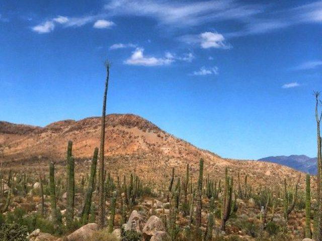 Ruta 1 Baja California - Indiana Jo