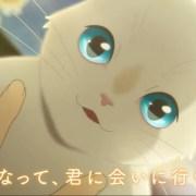 Film Anime Orisinal Nakitai Watashi wa Neko o Kaburu Dari Studio Colorido Akan Dibuka Pada Tanggal 5 Juni 23