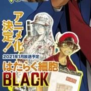 Anime Cells at Work! Code Black Ungkap Seiyuu dan Staf 17