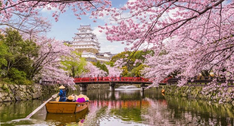 Mengenal Bunga Sakura, Tumbuhan Paling Ikonik saat Musim Semi di Jepang 1