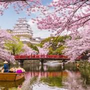 Mengenal Bunga Sakura, Tumbuhan Paling Ikonik saat Musim Semi di Jepang 11