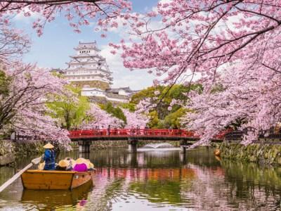 Mengenal Bunga Sakura, Tumbuhan Paling Ikonik saat Musim Semi di Jepang 92