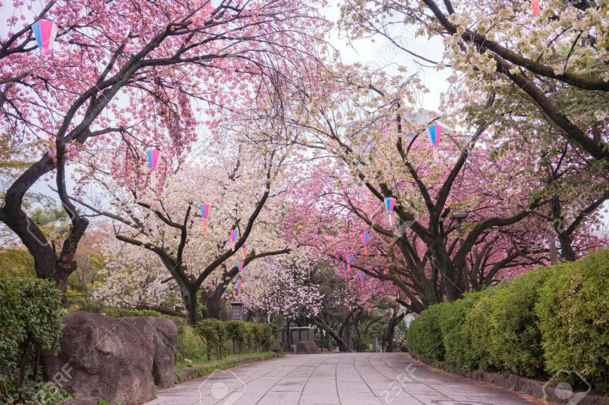 Mengenal Hanami, Tradisi Unik di Jepang yang Sangat Menyenangkan! 2