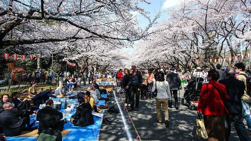 Mengenal Hanami, Tradisi Unik di Jepang yang Sangat Menyenangkan! 5