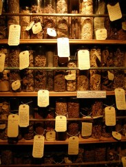 Jars in Witchcraft Museum Boscastle