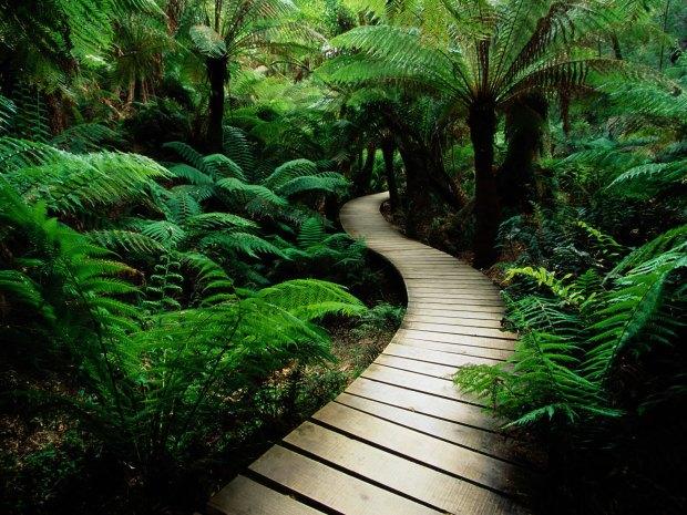 Heksencafes Path
