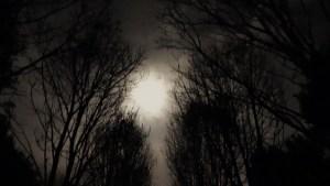 De volle maan van de klif door de bomen heen gezien