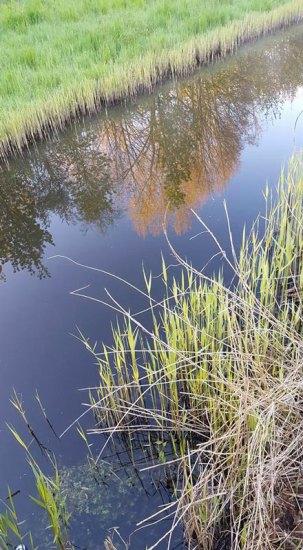 rewild-weerspiegeling