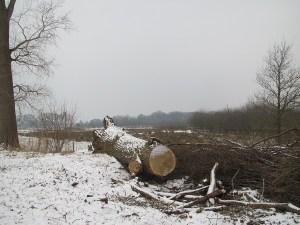 Landschap met boomstronk, sneeuw en kale bomen