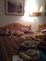 This is why we started just getting a room with two beds.