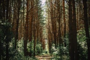 ultra-marathon-blog-cover-photo a wooded trail