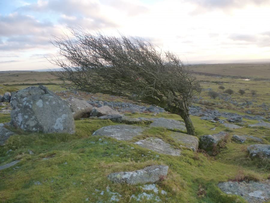 Cheesewring and Bodmn Moor