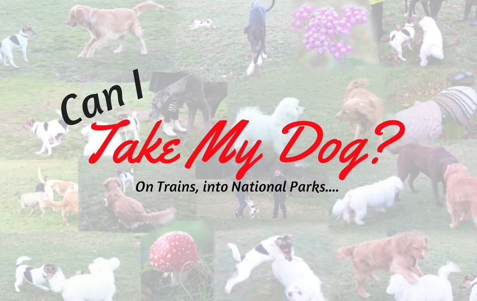 Can I Take My Dog?