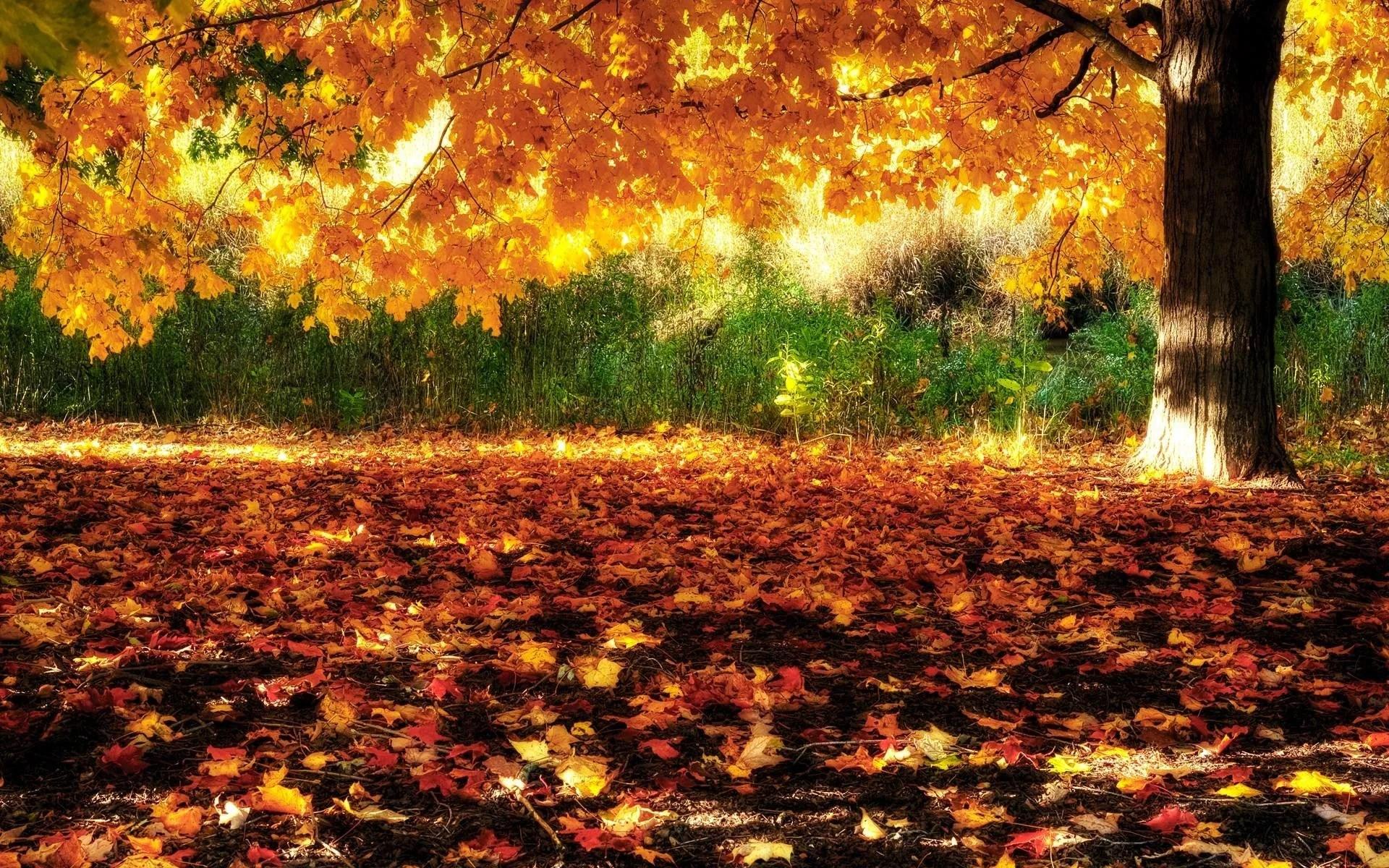 Greenfield Park West Allis Wisconsin In The Autumn Widescreen Wallpaper