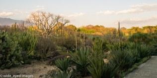 Botanic Gardens, Oaxaca City