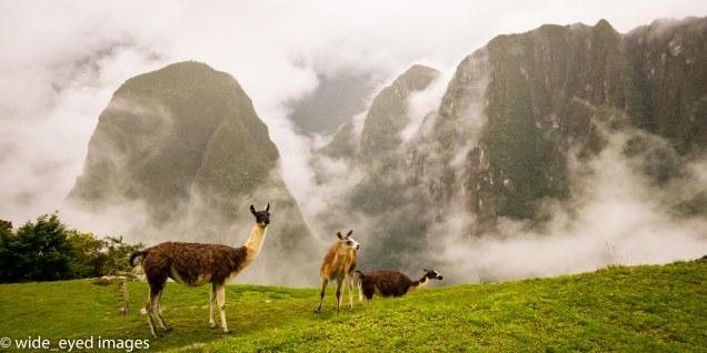 Central America_Peru_Machu Picchu_03