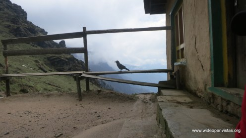 Climbing up the Lamja pass (3530m) -we saw two destroyed houses and some smart crows
