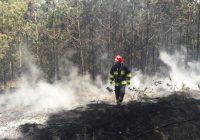 Pożar lasu w Zabartowie. Na miejscu cztery zastępy straży pożarnej !