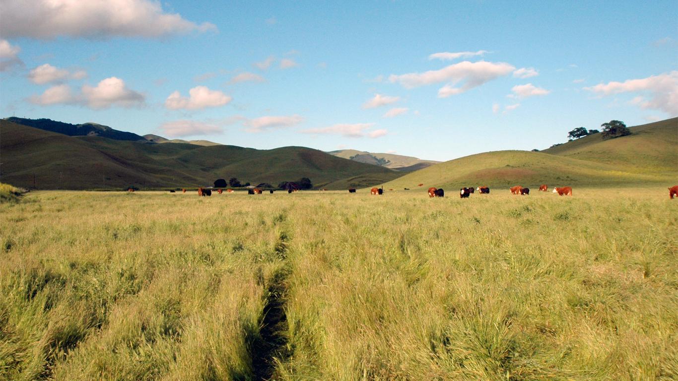 Wiedemann Ranch Beef Company