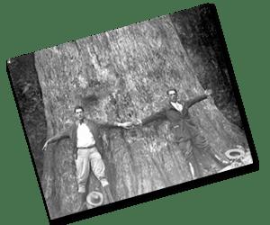 cypress_loggers1