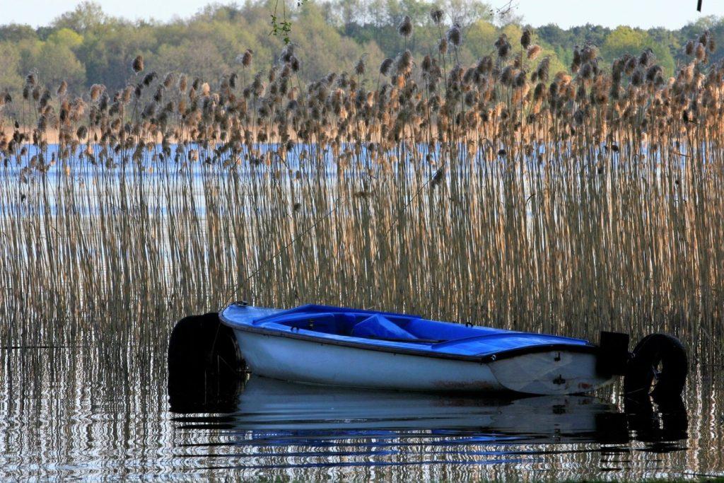 Jezioro Dominickie koło Leszna. Łódka wśród szuwarów.