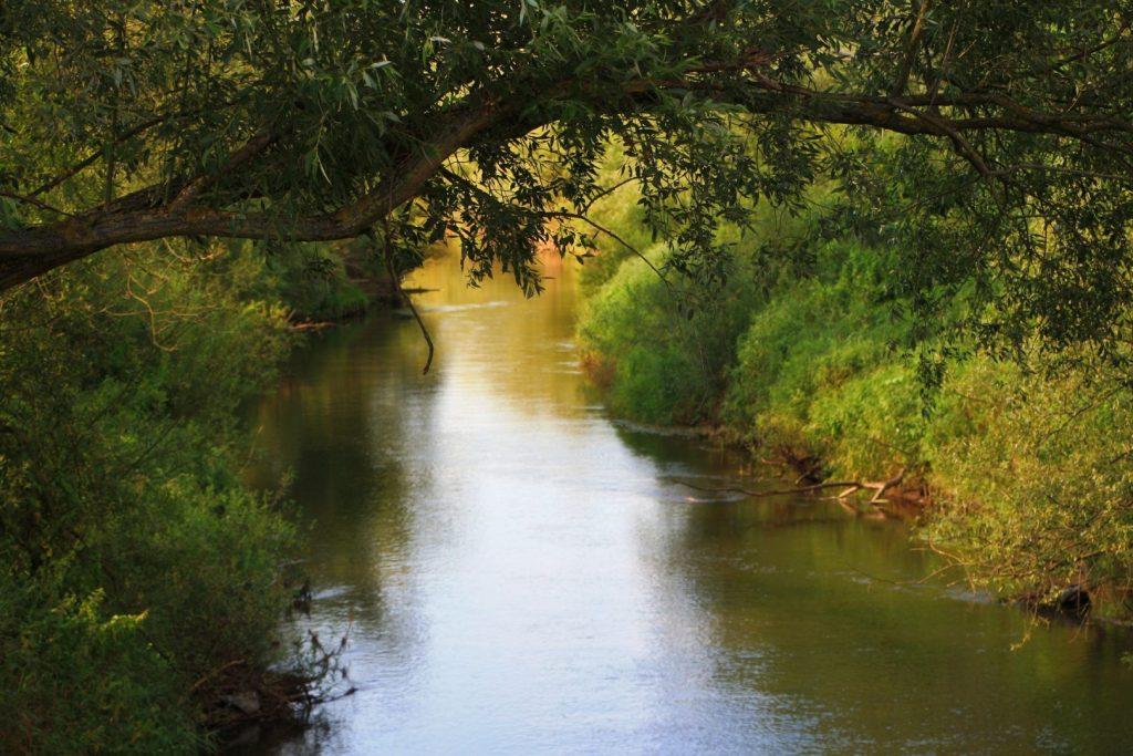 Rzeka Prosna, brzegi porośnięte lasem