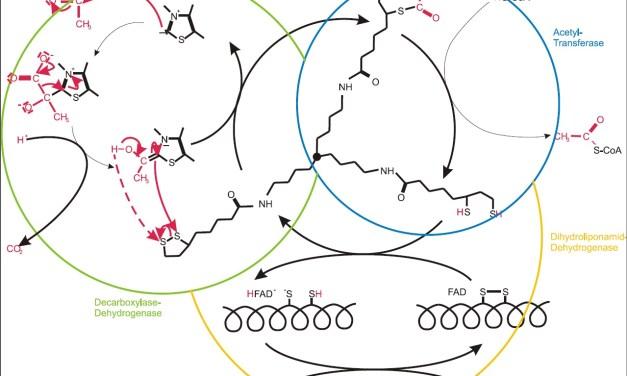 Alles Leben ist Biochemie