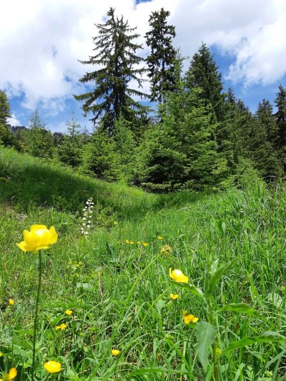 Trollblumen und Waldvögerl