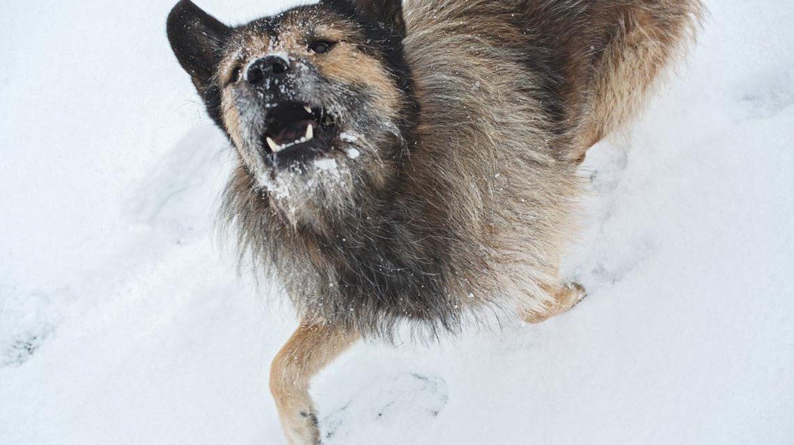 Traumdiebstähle: Hund im Schnee von Silke Scheurmann. Foto: Silke Scheuermann.