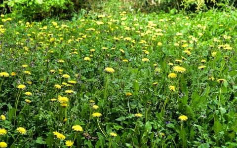 Natürlicher Garten: irgendwo in Wiesbaden Sonnenberg. Bild: Volker Watschounek