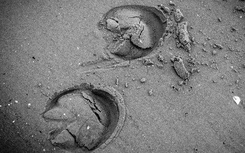 Tierspuren zeichnen udn nachzeichen. Bild Flickr / CC-BY / J. Triepke