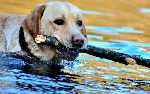Das Stöckchen darf am Sonntag nicht ins Wasser. Bild: G.a.z.a. / Simba