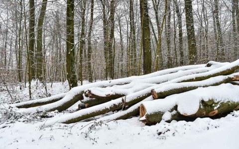 25 Prozent von Wiesbasden sind Waldflächen. Sie bieten den Bürgern der Landeshauptstadt ausreichend Erholung. ©2018 Volker Watschounek