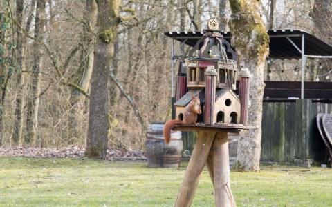Energie tanken, das Eichhörnchen hat es sich bequem gemacht. Wann es wohl einzieht? ©2018 Volker Watschounek