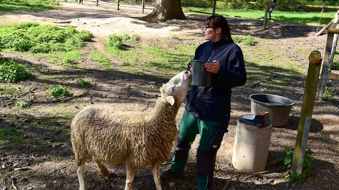 Schafen nah sein, Schafe kennenlernen