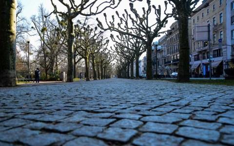Platanen in der Wilhelmstraße ©2019 Volker Watschounek