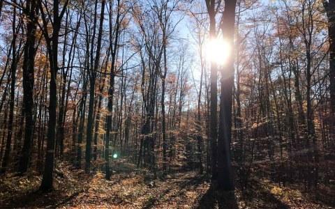 200 Millionen Euro zusätzlich für 100 Millionen Bäume und einen gesunden und starken Wald. Unser Wald!