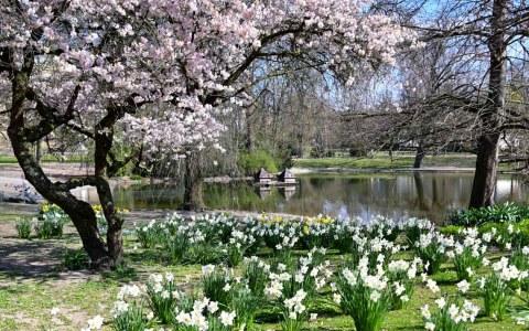 Frühling in Wiesbaden