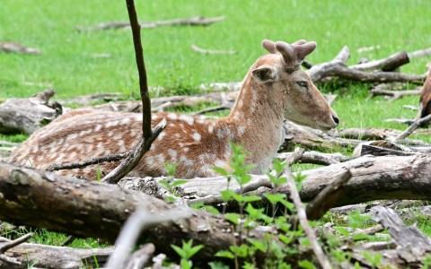 Archivbild: Erstes Wochenende im Tier- und Pflanzenpark Fasanerie nach dem Lockdown