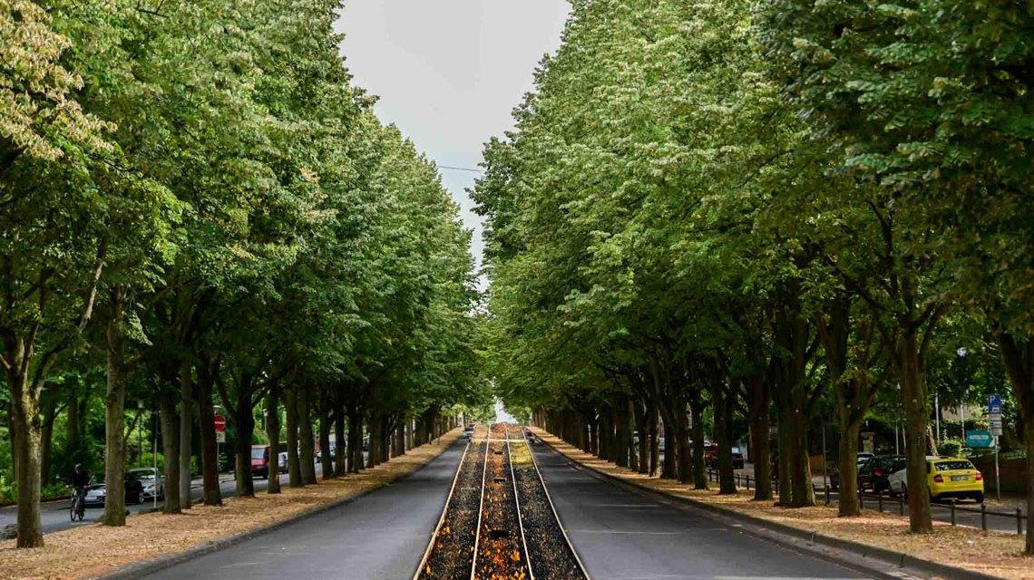 Biebricher Allee und Citybahn
