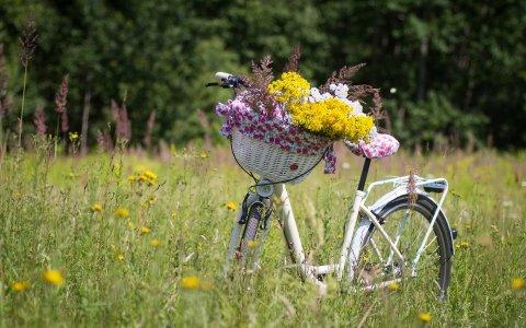 Fahrrad in der Natur ©2020 Kristine Lejniece auf Pixabay