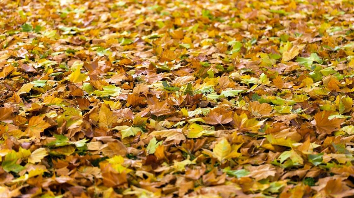Blätter ©2020 No-longer-here aus Pixabay