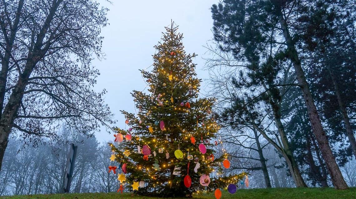 Weihnachtsbaum am Schelmengraben
