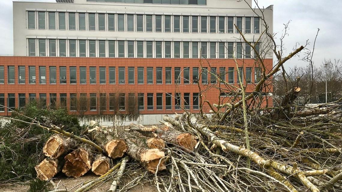 Schufa Gebäude, Osthafen Schierstein, davor gerodete Bäume