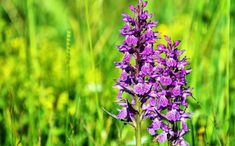 Orchideen ©2021 Bild von RÜŞTÜ BOZKUŞ auf Pixabay
