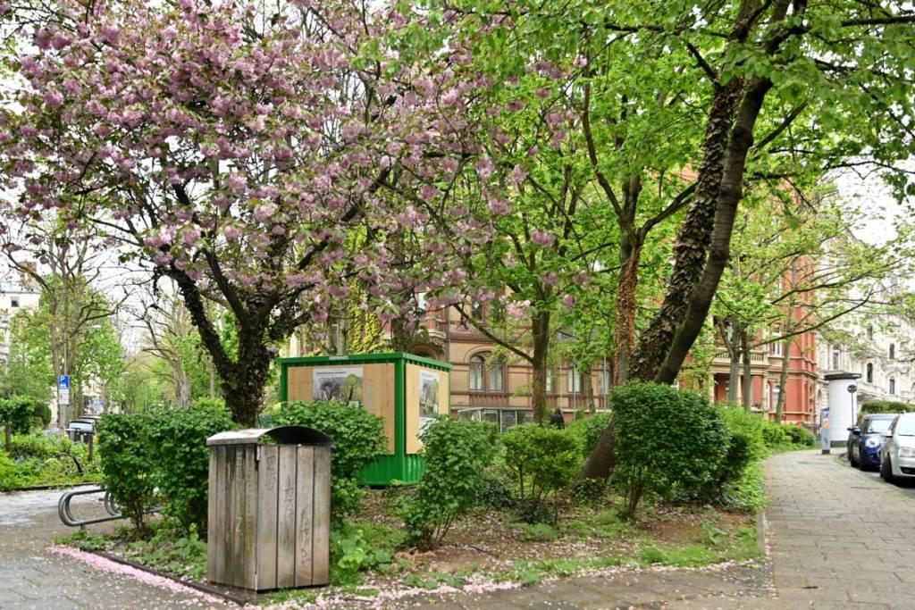 Quartiersplätze aufwerten, Beteiligungsprojekte Mikro-Oasen. Bülowplatz