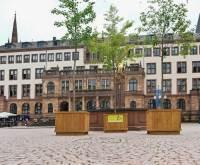 Klimabäumen: Wiesbadens Radfahrer werden belohn: mit drei Klimabäume. ©2021