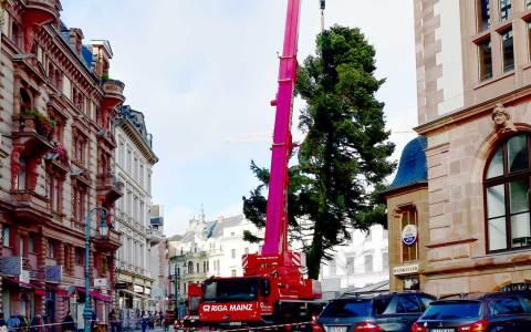 Wiesbadens Weihnachtsbaum wird aufgestellt