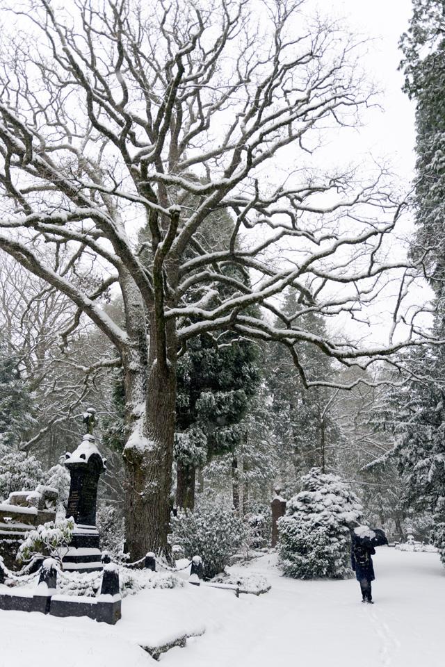 Wiesbaden-Nordfriedhof_Dezember_0009.jpg